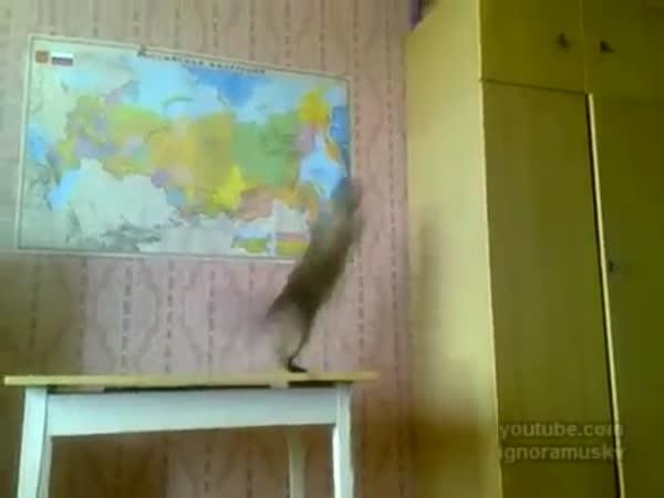 Kočičí kaskadéři [kompilace]