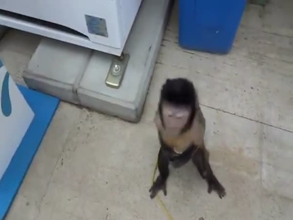 Opička vs. nápojový automat