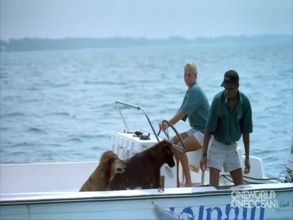 Delfín si dává pusu se psem