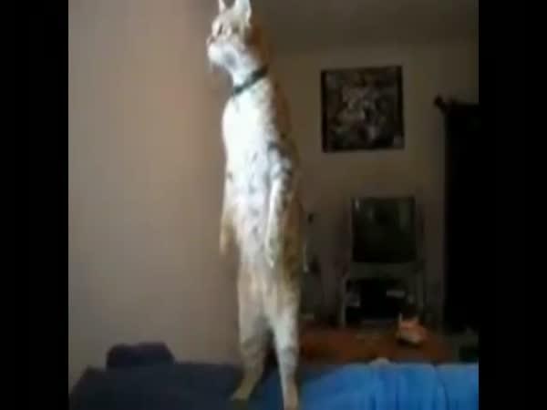 Kočka vyhlížející sirénu