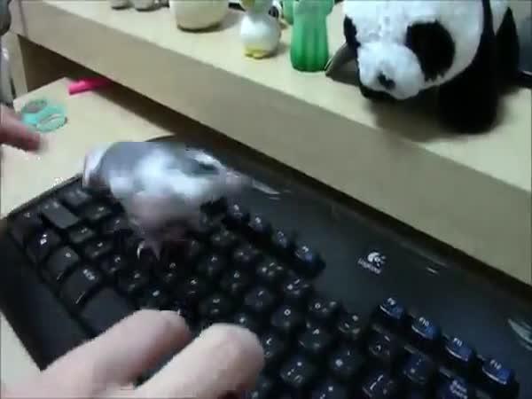 Obrana klávesnice
