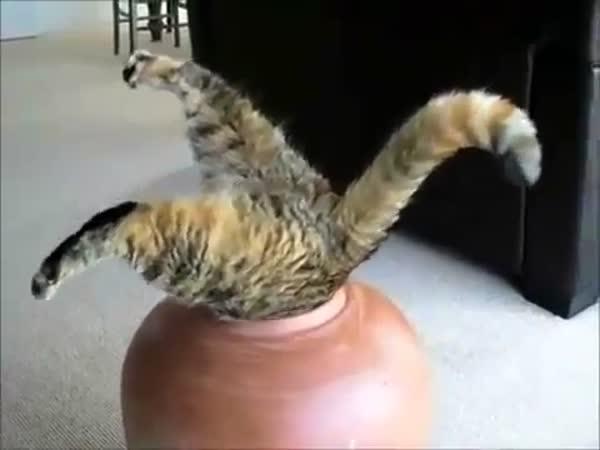 Šílené a roztomilé kočičky