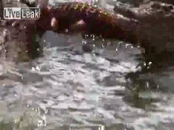 Krokodýl na baterky