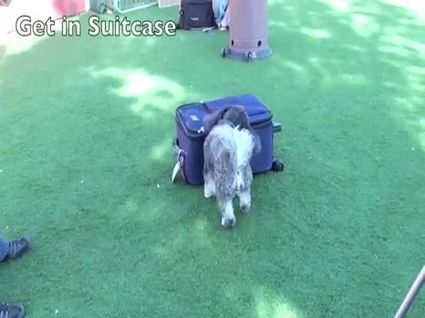45 netradičních psích triků