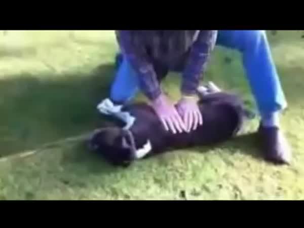 Masáž psího srdce