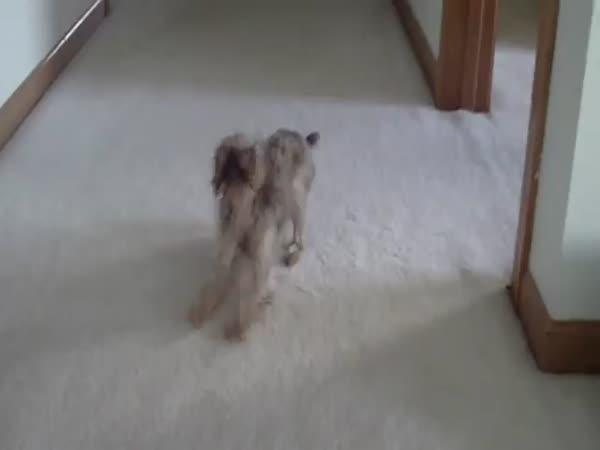 Naštvaný vykoupaný pes