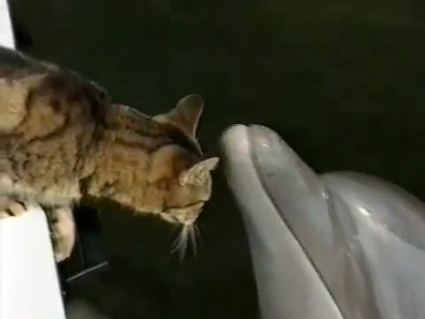 Nebojácná kočička a delfín