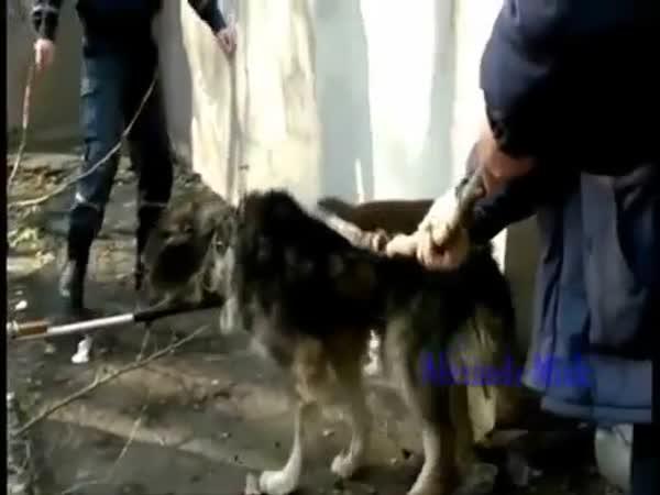 Záchrana zvířat # 2