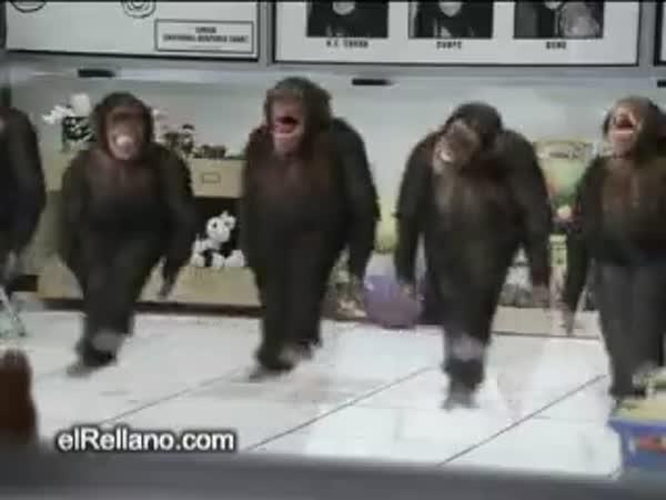 Opičáci tancují irský tanec