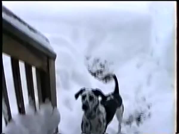 Pejsek, který miluje sníh