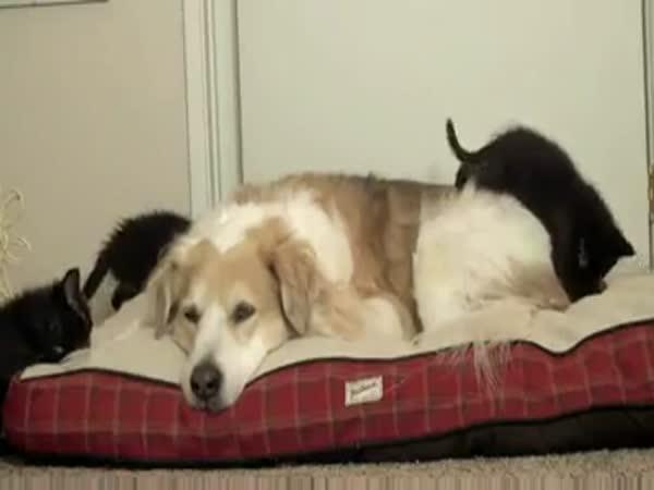 Přátelství pejska a kočiček