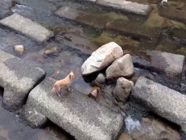 Pes aportuje míček sám sobě