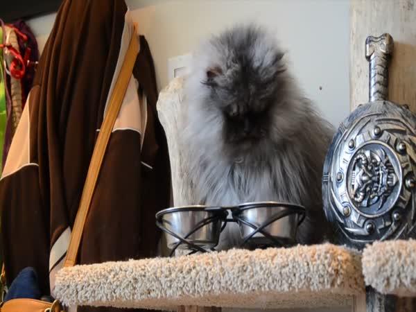 Kočka s nejdelší srstí na světě