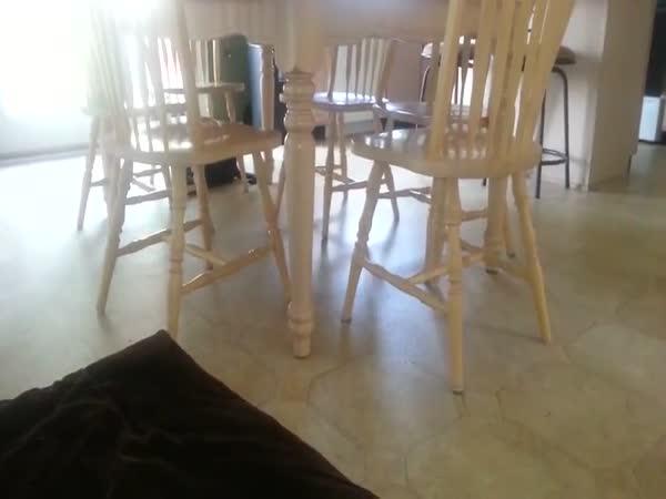 Kočka si hraje na opici