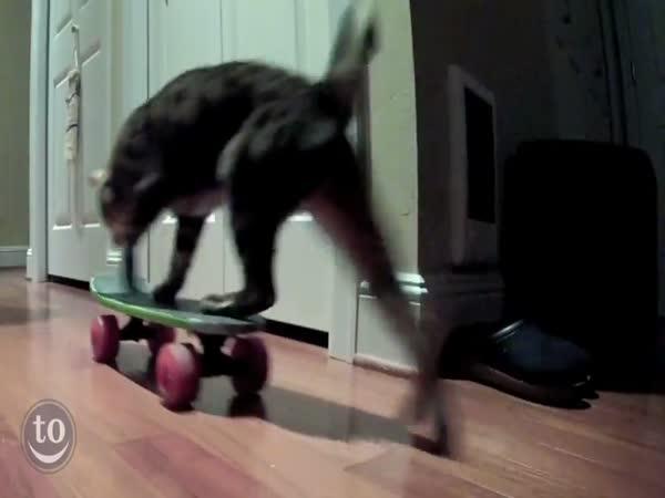 Zvířátka jezdí na skateboardu