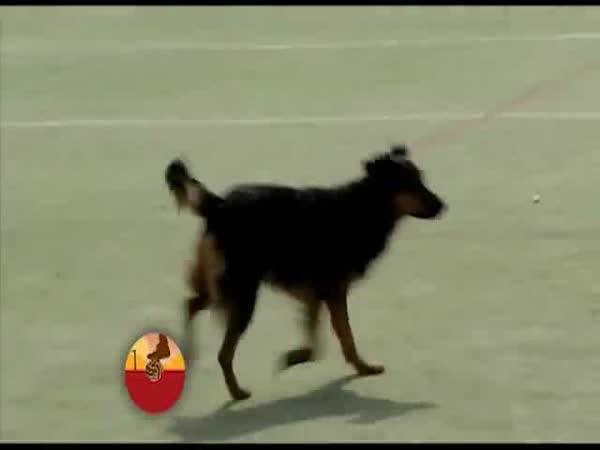 Pes dvanáctým hráčem