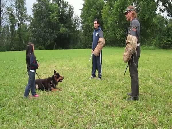Německý ovčák brání pětiletou holčičku