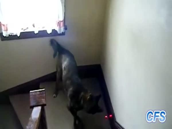 Psi a laser [kompilace]