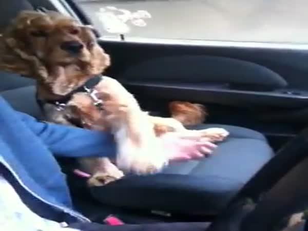 Strach z jízdy autem