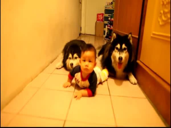 Psi napodobují lezoucí batole