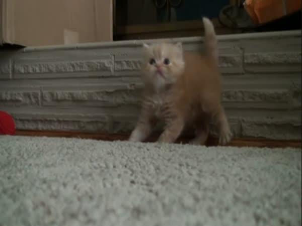 Roztomilé koťátko