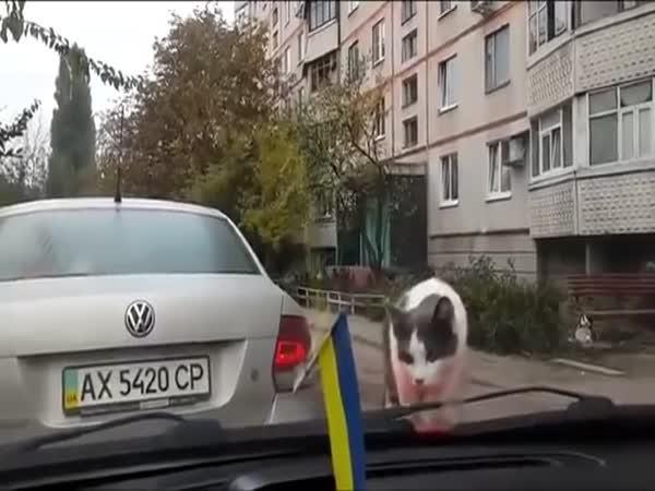 Kočka na autě