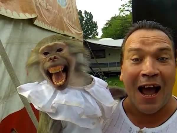 Opice imituje páníčka