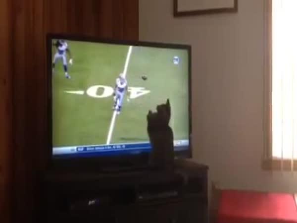 Kočka chytá míč z televize