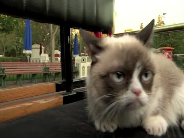 Nevrlá kočka v Disneylandu