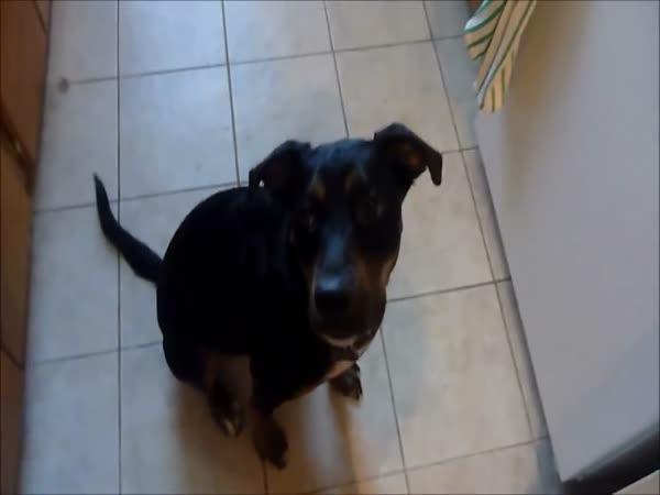 Originální povel pro psa