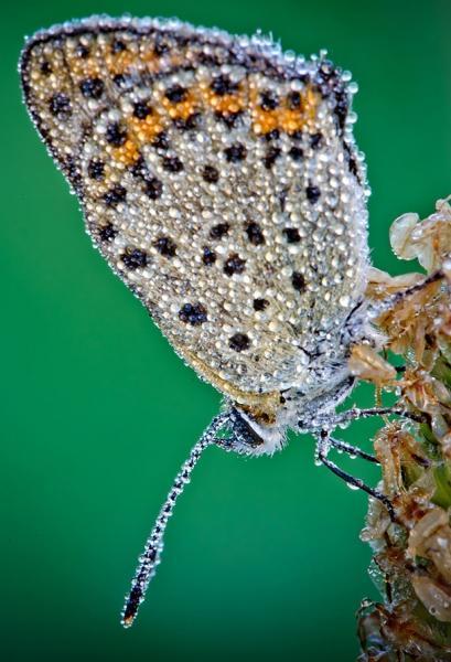 GALERIE - Hmyz jako šperk