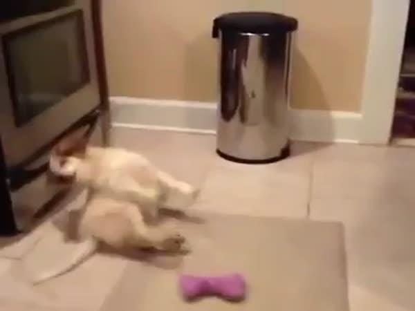 Nemotorné štěně