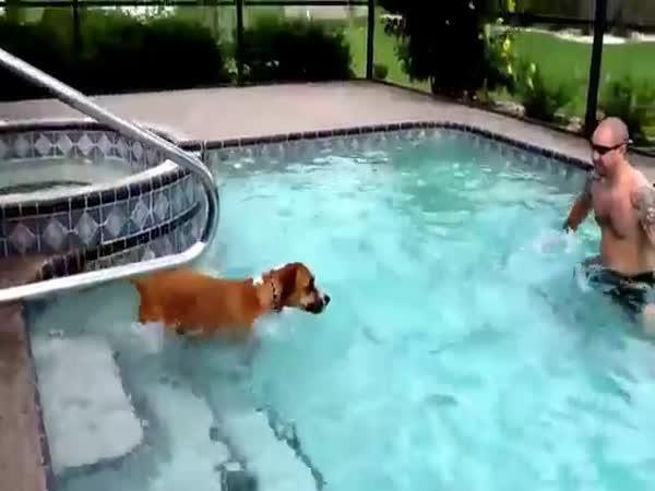 Pejsek si poprvé zaplave