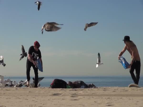Nachytávka - Šílení ptáci