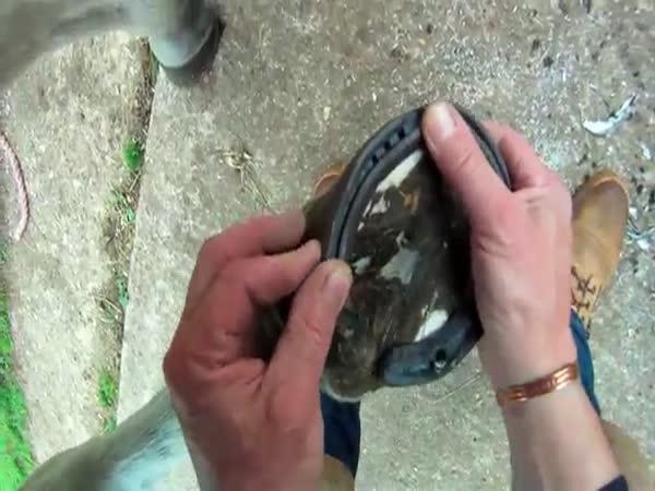 Kování koně - ruční práce