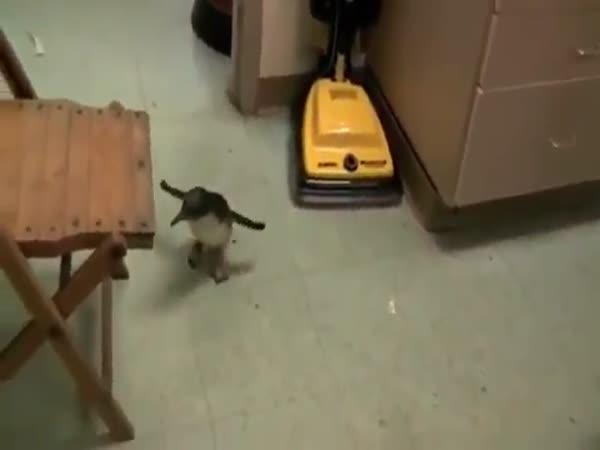 Tučňák domácím mazlíčkem