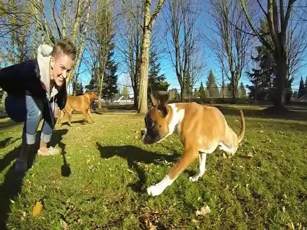 Šťastné štěně po operaci