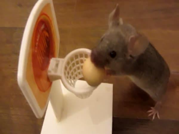 Trénované myši