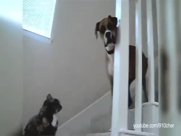 Psi, co se bojí koček