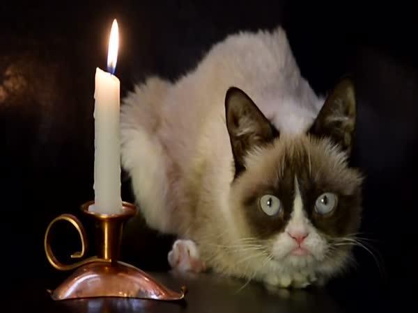Slavné kočky z internetu hvězdami klipu