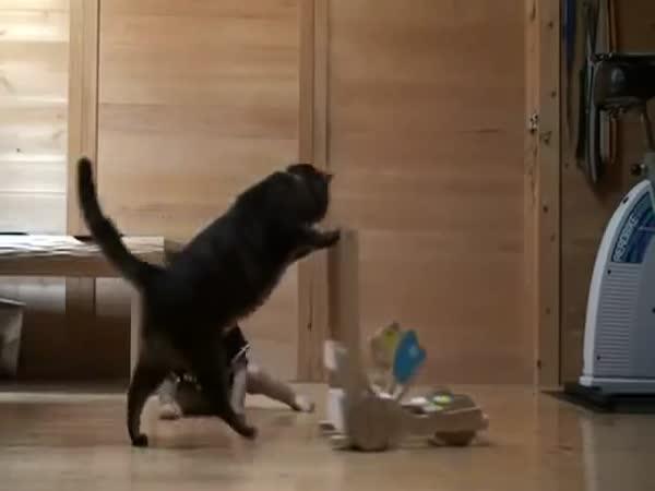 Kočka učí dítě chodit