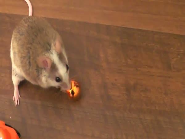Myška zdobí vánoční stromeček