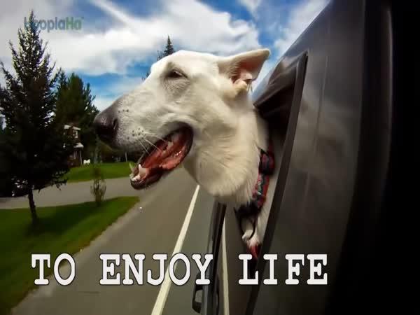 Věci, které nás naučili psi
