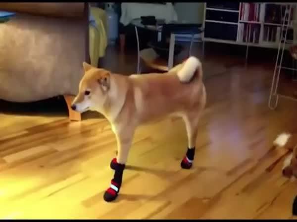Psi s botama