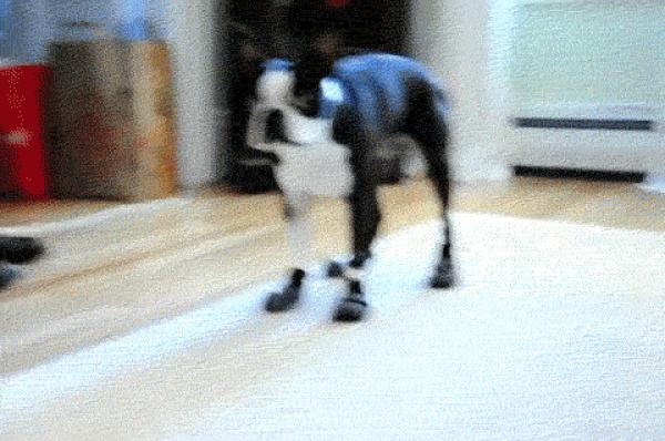 GALERIE - Nejvtipnější psí gify
