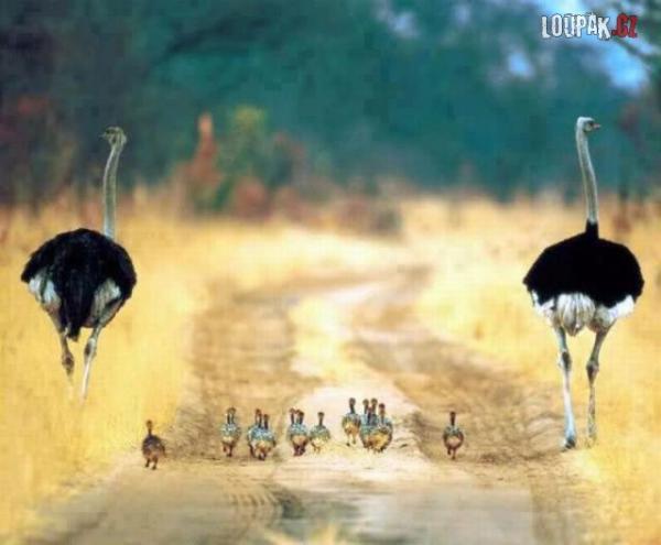 OBRÁZKY - Ze života zvířátek 93.díl