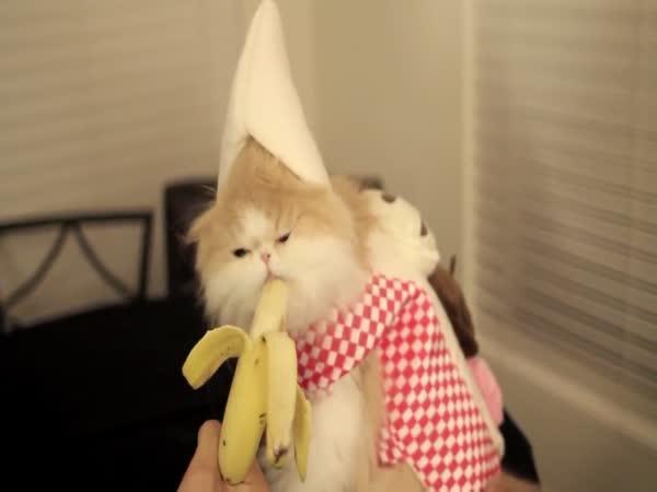 Kočička jí banán