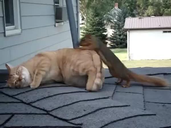 Kočka a veverka si hrají