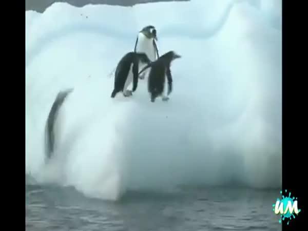 Nemotorní tučňáci #2