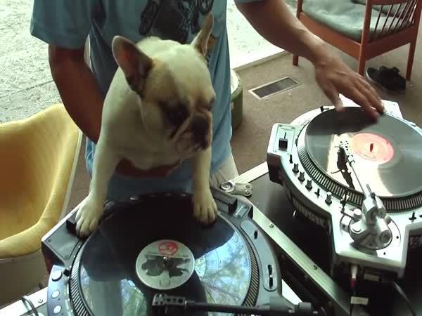 Pes je lepší DJ než člověk
